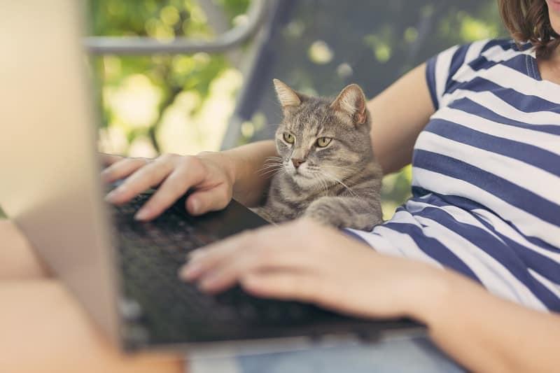 Любитель кошек может означать, что у вас более высокий интеллект по сравнению с любителями собак.