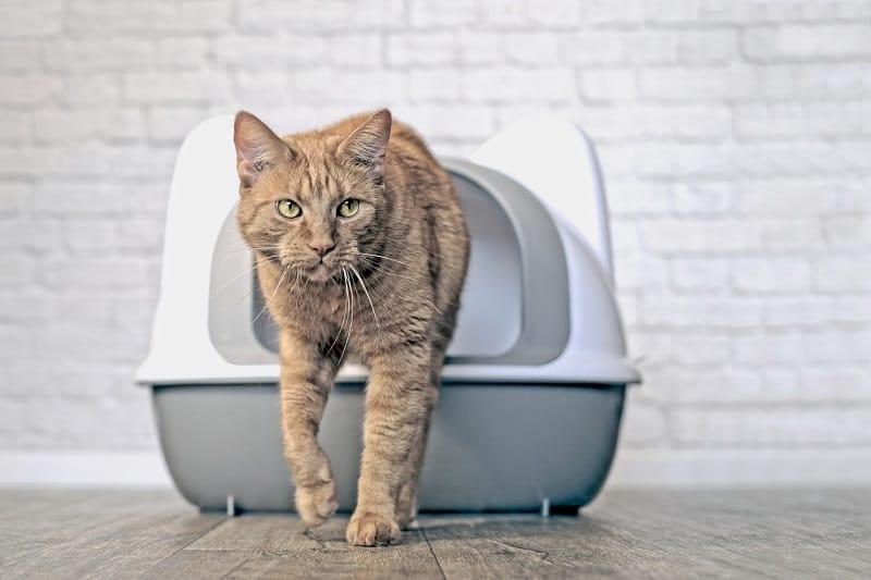 Кошки не требуют особого ухода по сравнению с собаками.