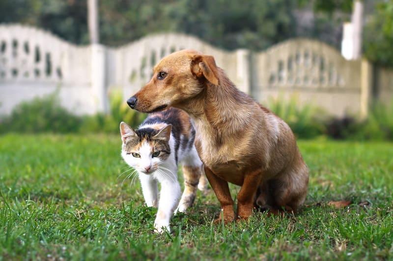 Кошки, как правило, живут дольше собак.