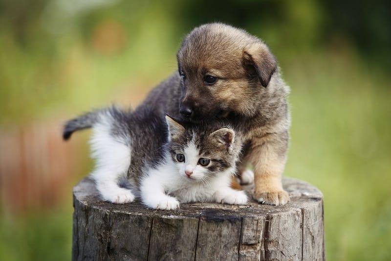 За котятами легче ухаживать, чем за щенками.