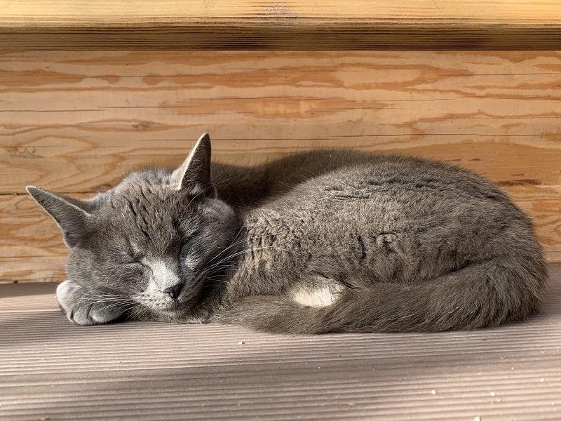 Кошки - хозяева сна.