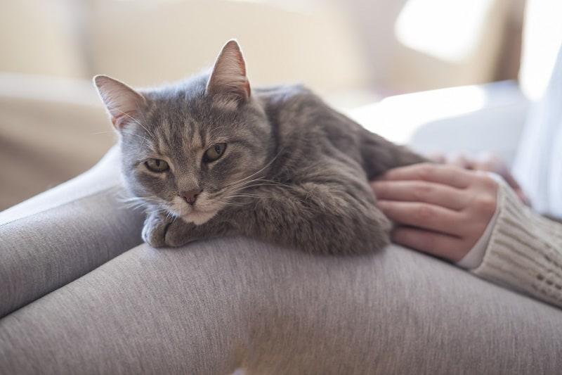 Кошки более спокойные по сравнению с собаками.