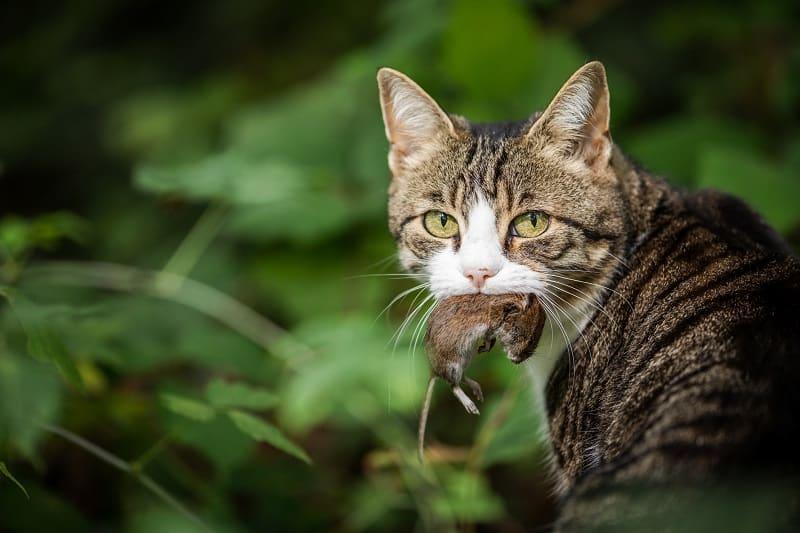 Кошки защищают ваш дом от грызунов и вредителей.