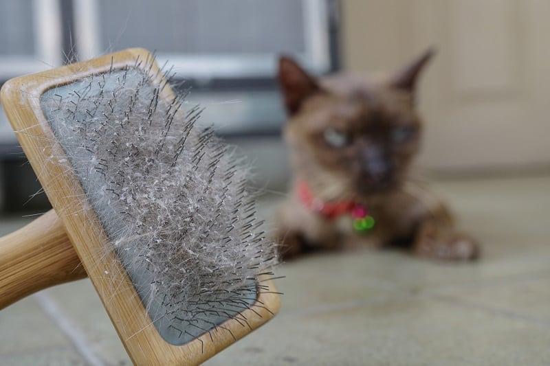 4 домашних средства от кошачьей перхоти