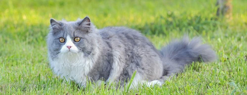 9 самых ласковых пород кошек - Рэгдолл