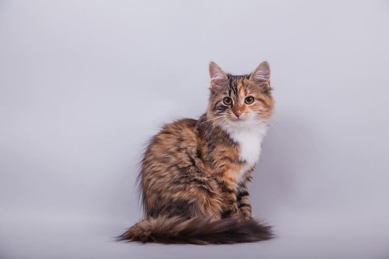 Акриловая краска токсична для кошек