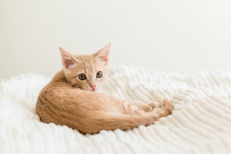 Грелки безопасны для кошек
