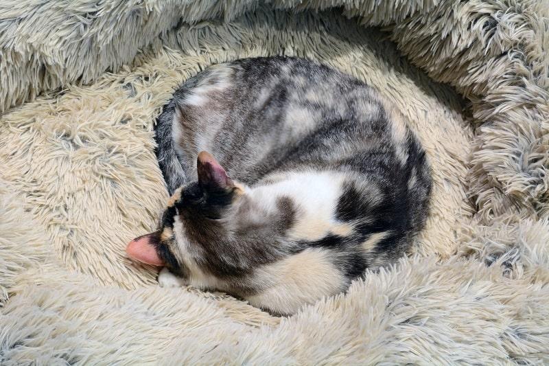 Безопасны ли подстилки для кошек с подогревом?