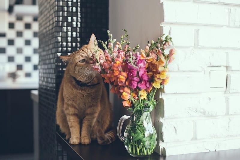 Безопасны ли Wallflowers для ванн и тела для домашних животных?