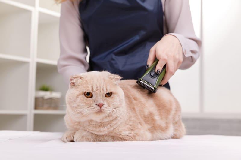 Бритье кошек за и против