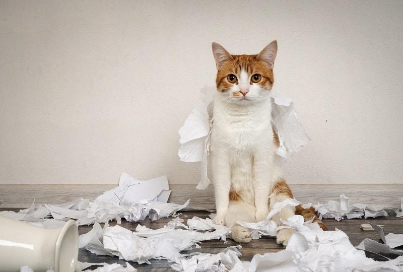 Бумага для кошек