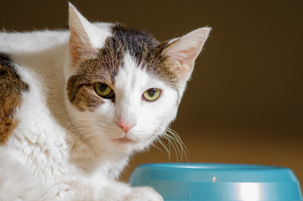 Добавки калия для кошек