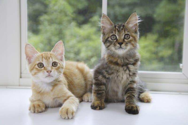 Едят ли кошки других кошек