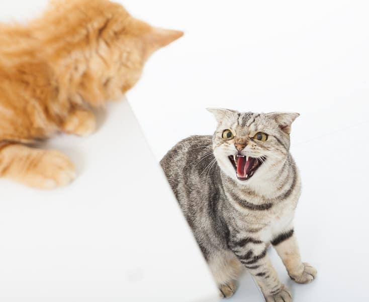 Феромоны для кошек побочные эффекты