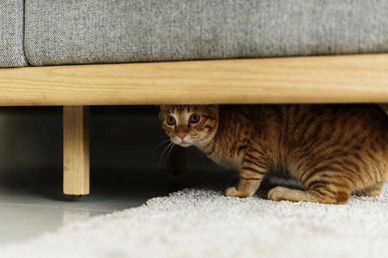 Где прячется мой кот