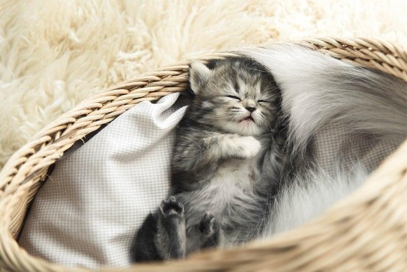 График сна котенка