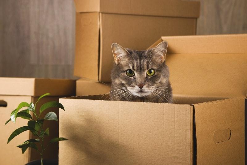 Грустят ли кошки, когда их снова принимают в дом?