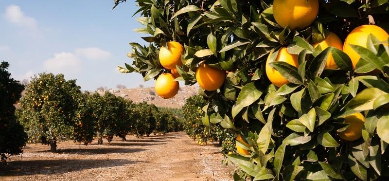 Апельсиновый завод