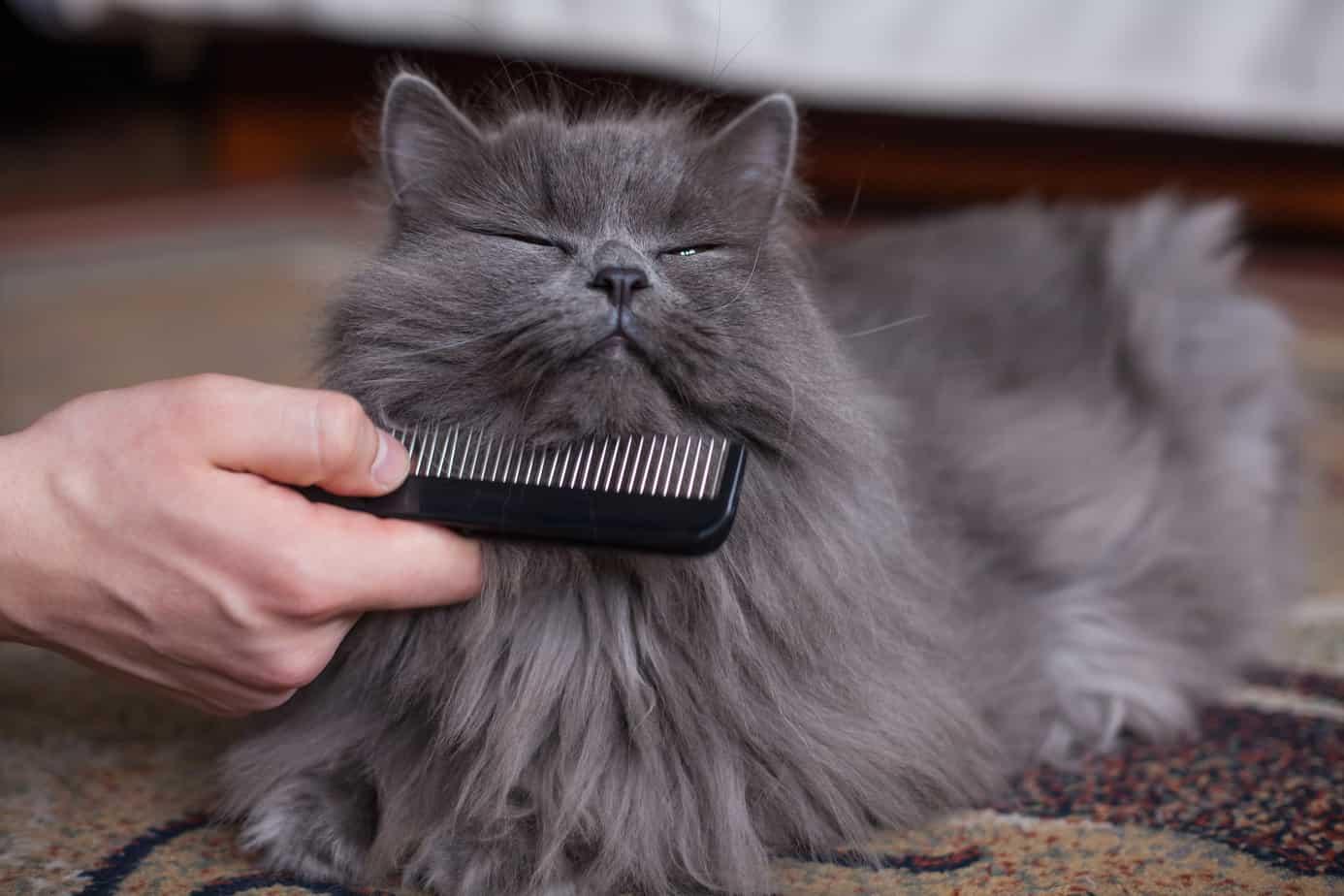 Как часто мне следует расчесывать кошек