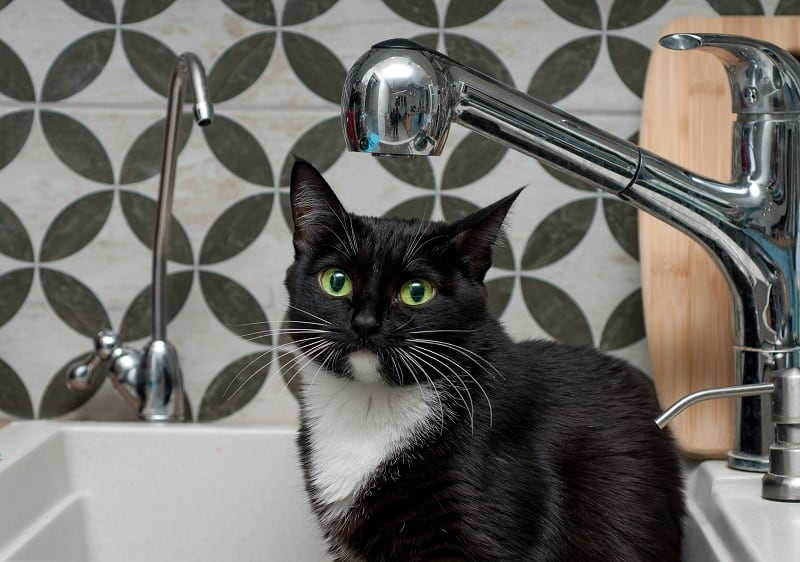 Как часто следует купать кошку?