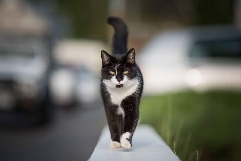 Как далеко бродят кошки от своих домов