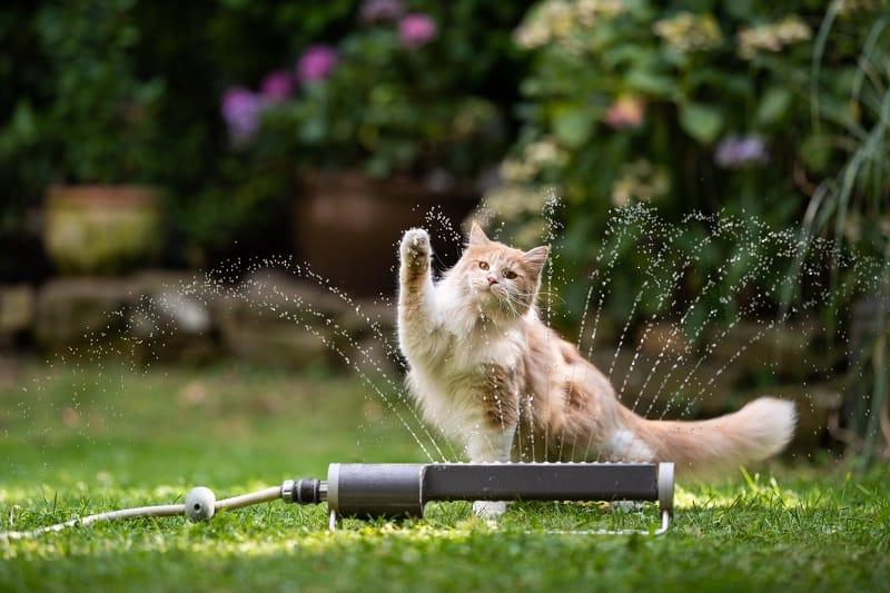 Как держать кошку во дворе