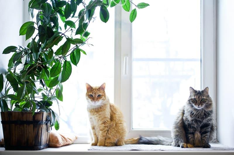 Как долго держать кошек отдельно после дегельминтизации