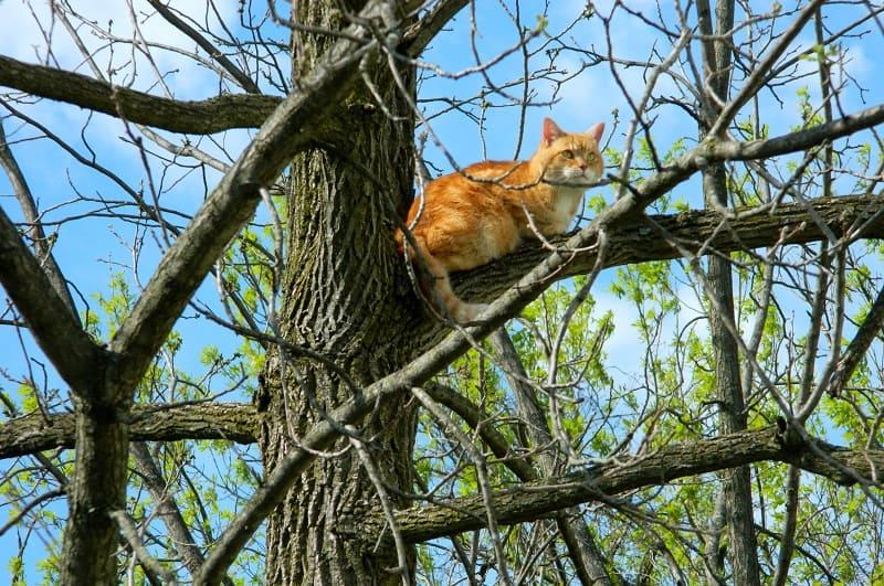 Как долго кошка может оставаться на дереве