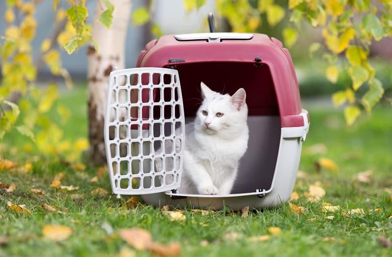 Как долго кошка может оставаться в клетке