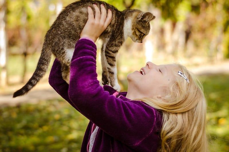 Как долго кошка может помнить человека