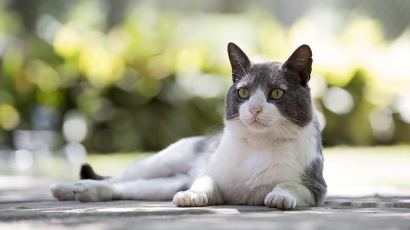 Как долго кошка может жить с глистами