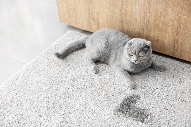 Как избавиться от запаха кошачьей мочи из ковра