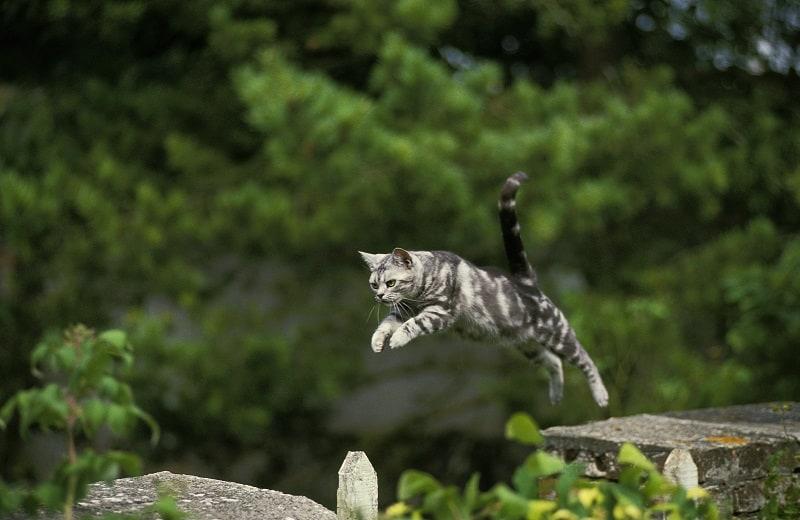 Как кошки могут так высоко прыгать