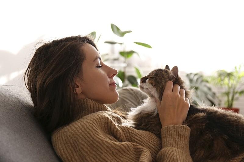 Как кошки видят человеческие лица?