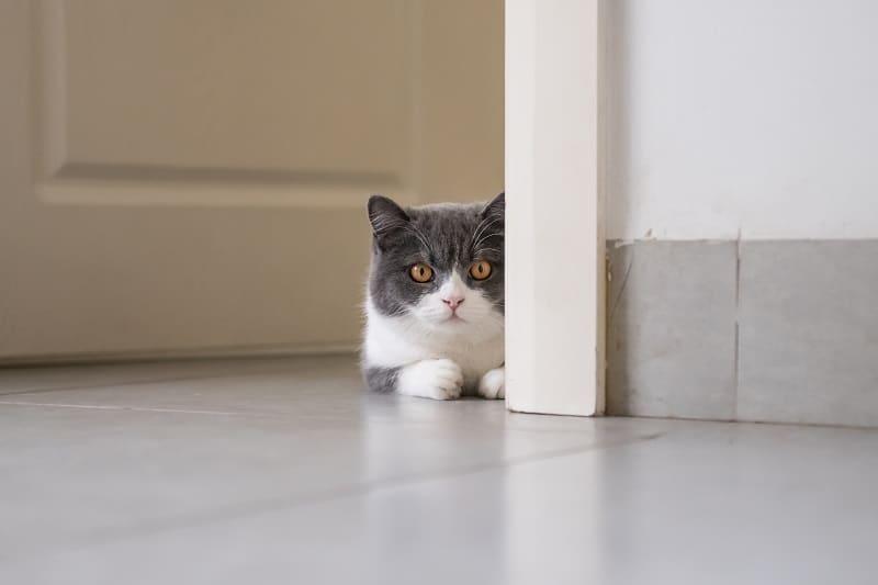 Как не дать кошкам открываться двери