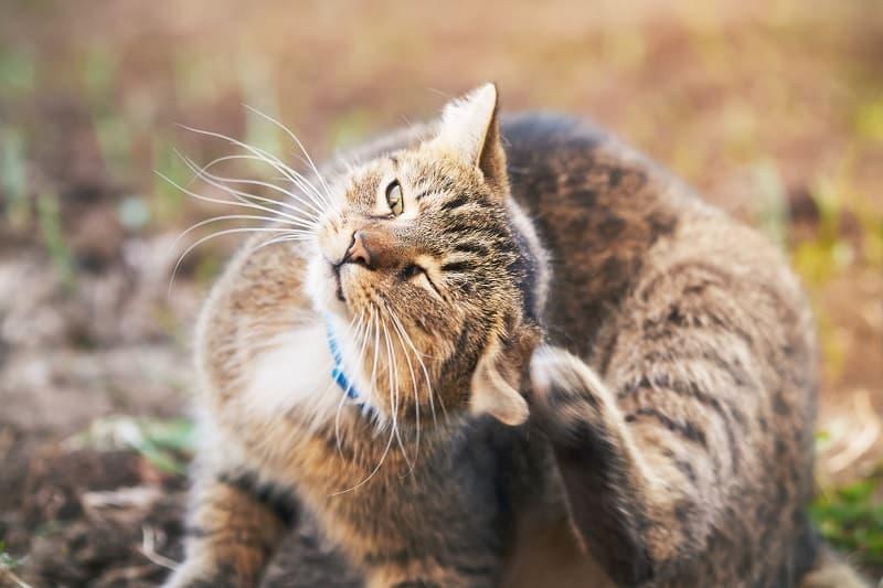 Как не дать кошке поцарапать рану