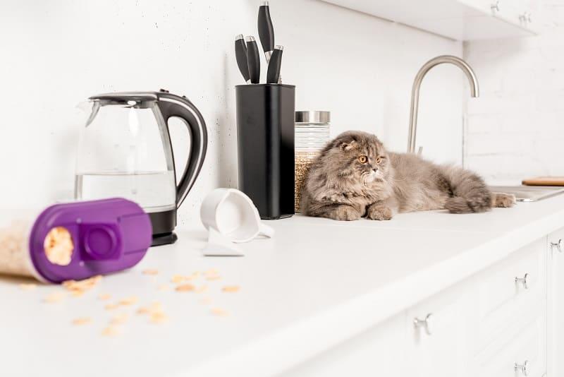 Как не подпускать кошек к определенным местам