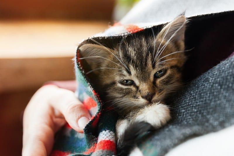 Как определить, что ваша кошка - негодяйка