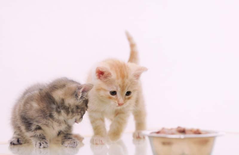 Как отучить упрямого котенка