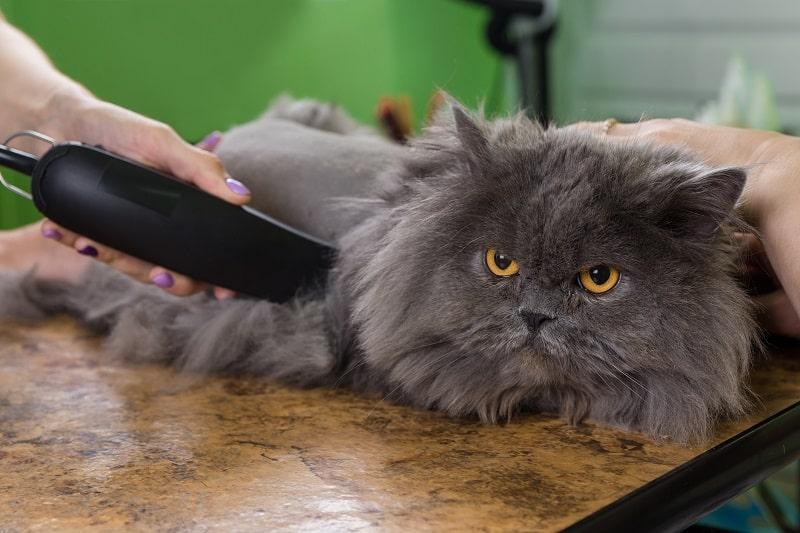 Как побрить длинношерстную кошку
