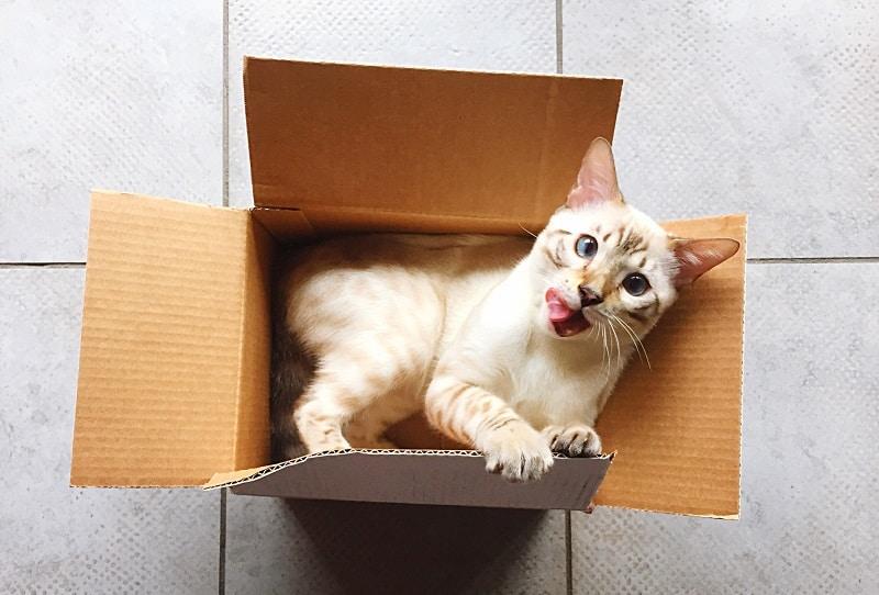 Как поймать умного кота