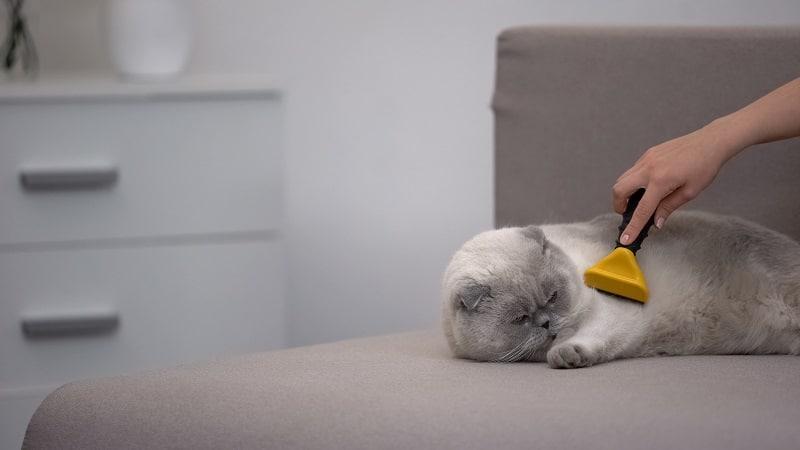 Как предотвратить линьку кошек?