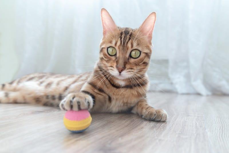 Как развлечь кошку в маленькой квартире