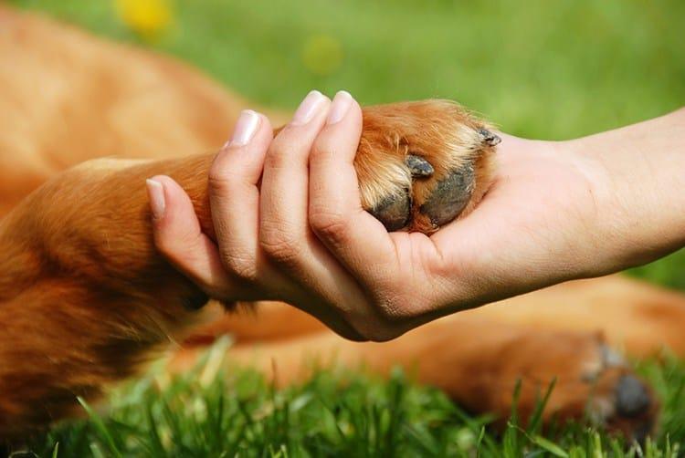 Как справиться с потерей домашних животных