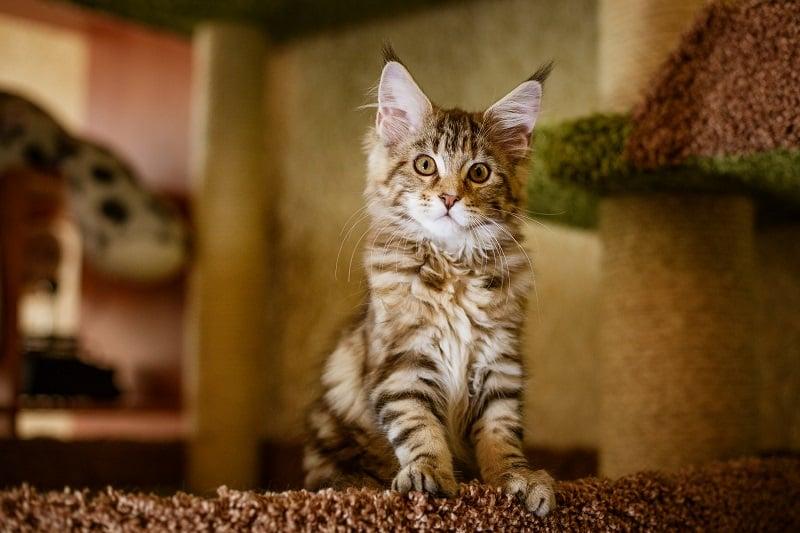 Как спреи кошек-самцов?