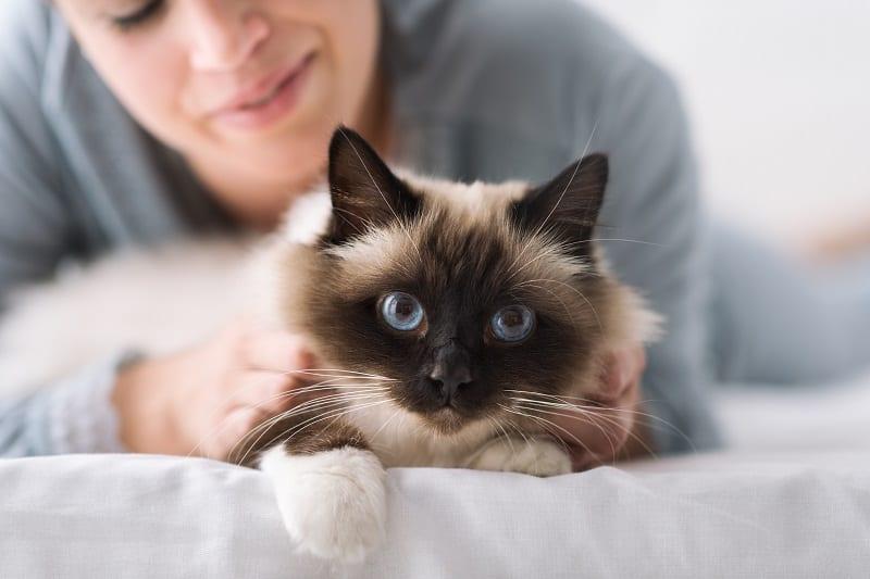 Как уберечь других кошек от моей кошки