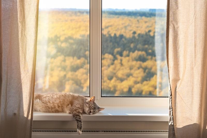 Как держать кошек подальше от занавесок
