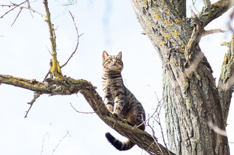 Как уберечь кошку от лазания по дереву?