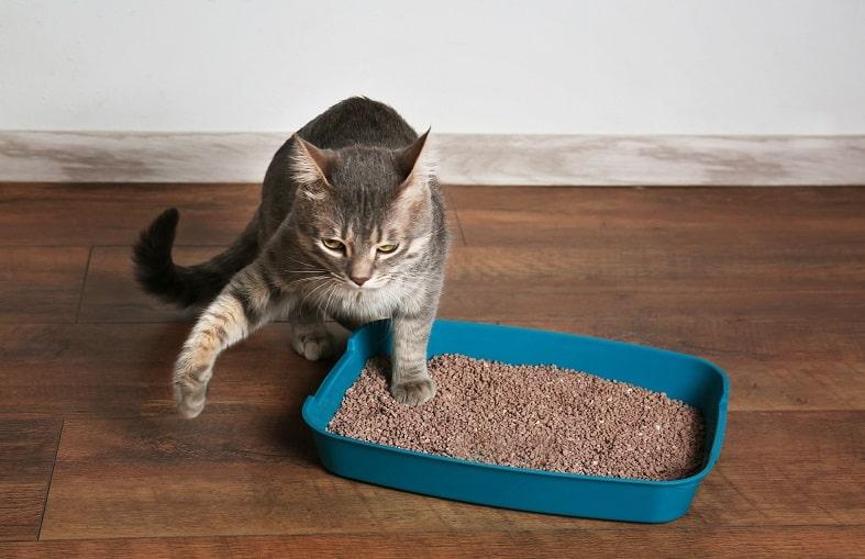 Как удалить кошачью мочу с деревянного пола