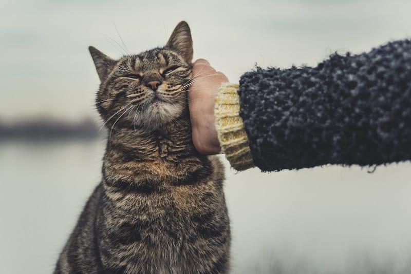 Как успокоить гипер-кошку?